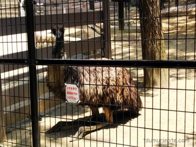 五月山動物園のエミュー